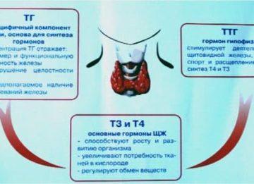 Функции и нормы ТТГ, Т3 и Т4