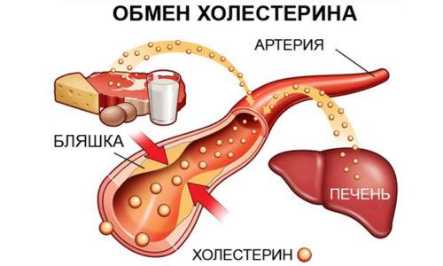 Зеленый чай за счет нормализации уровня холестерина в крови препятствует атеросклерозу сосудов